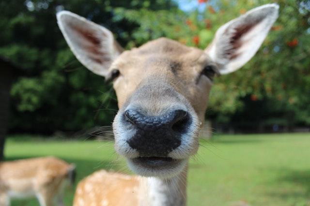 鹿の鼻アップ