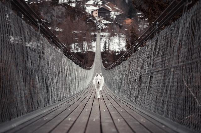 橋の向こうからやってくる犬