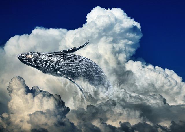 くじらと雲