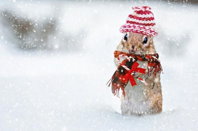 クリスマスのリス