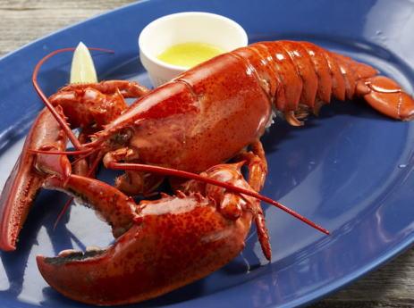 スイス政府、動物保護法を改正し、ロブスターを熱湯に放り込む調理法を禁止 「事前に気絶させる事」 … 海産甲殻類を氷詰めして輸送する事も禁止