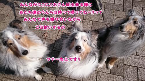 DSC_0018_convert_20180217170730.jpg