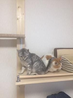 image平井猫画像1