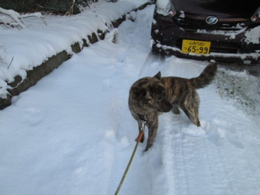 IMG_1657雪散歩