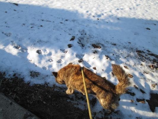 IMG_1674雪の畑を