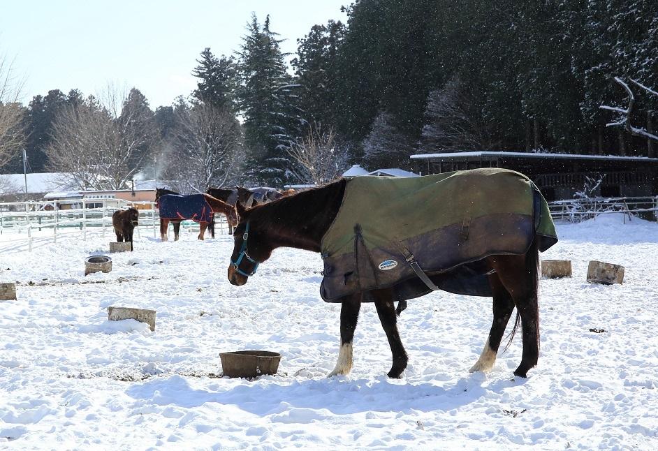 2018 1 3ブログ 雪の中の馬.jpg