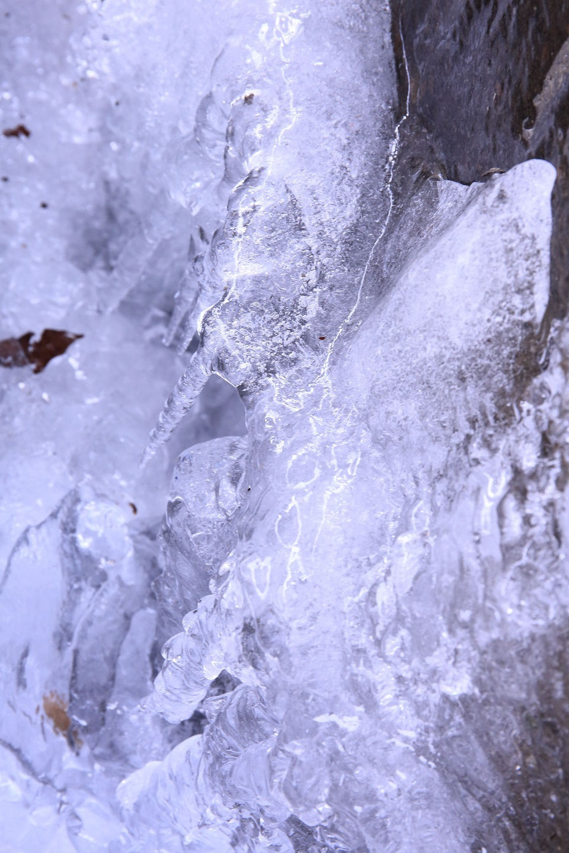 ブログ 手水舎の水も氷る.jpg