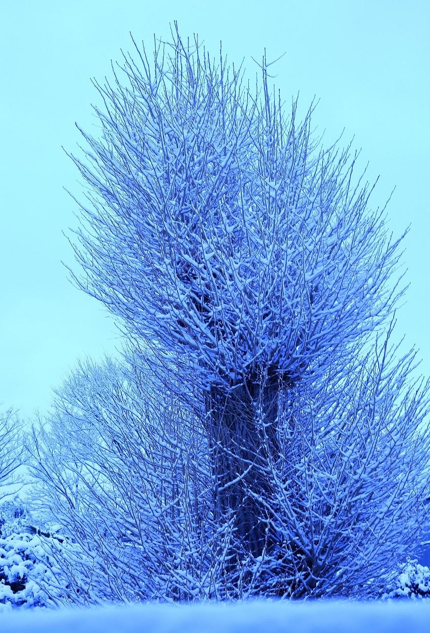 ブログ 2018 2 23 雪の盆栽.jpg
