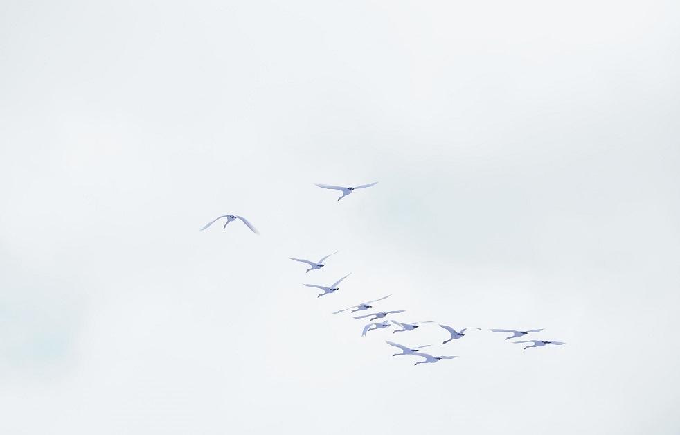 ブログ 白い空に白鳥なんてシャレになるかよ!.jpg