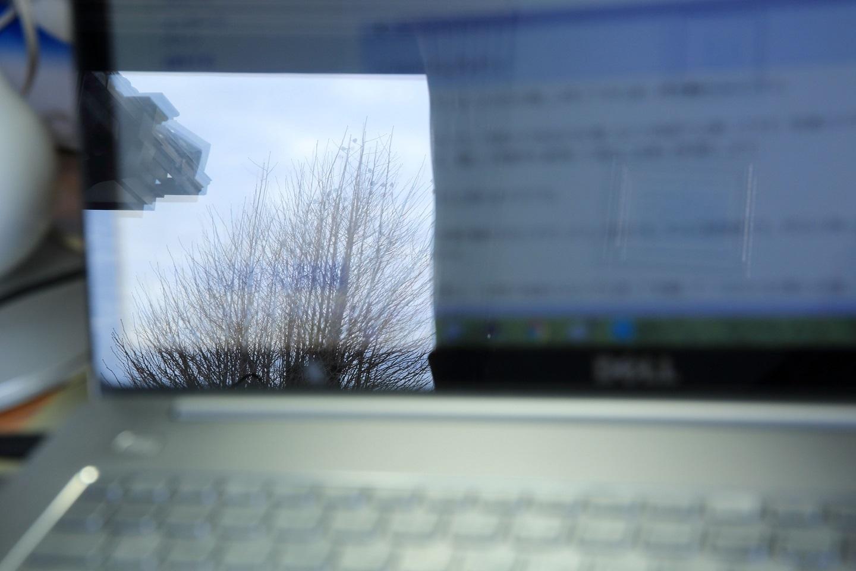 ブログ パソコンに映るイチョウさん.JPG