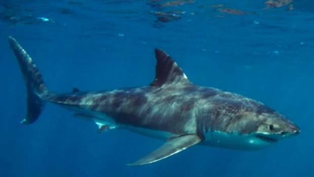 sharkk.jpg