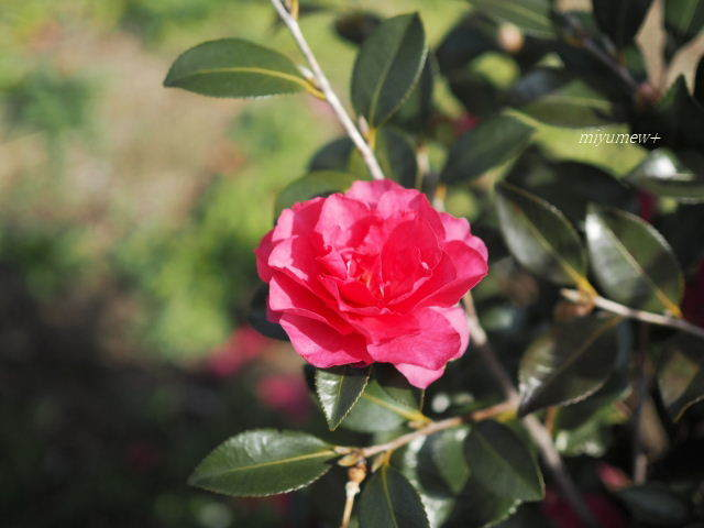 あかい花180121
