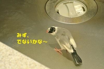 DSC_8303済
