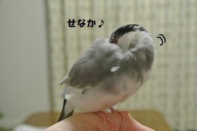 DSC_8326済