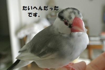 DSC_8348済