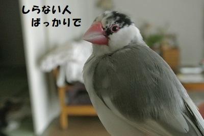 DSC_8349済