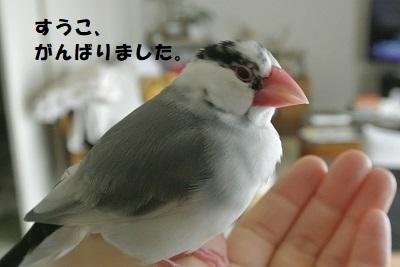 DSC_8352済
