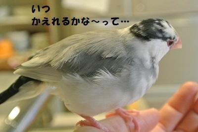 DSC_8337済