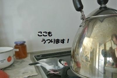 DSC_8390済