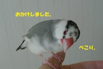 DSC_8288.jpg