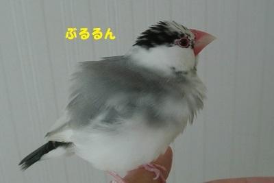 DSC_8291.jpg