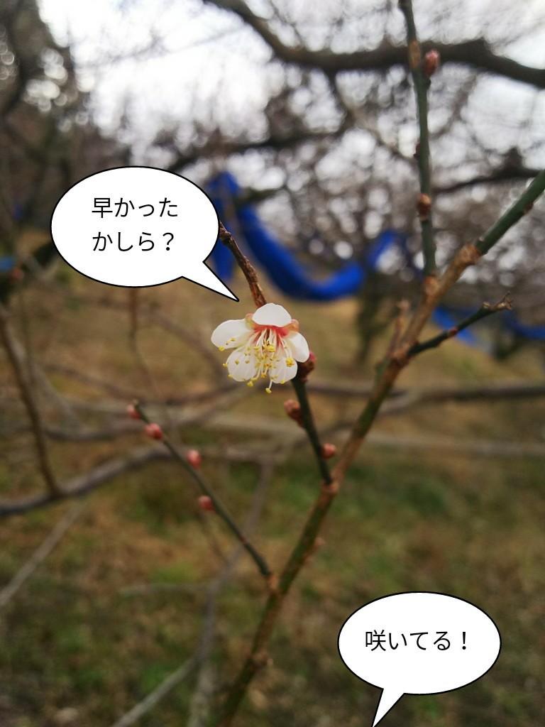 咲いてる!