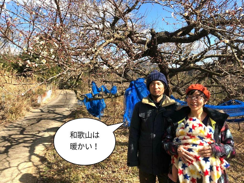 和歌山は暖かい!
