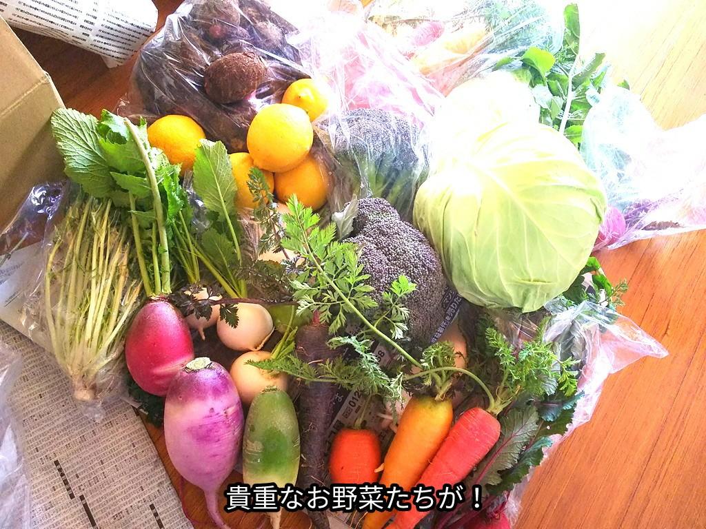 貴重なお野菜たちが!