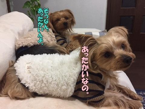 image10107020301.jpg