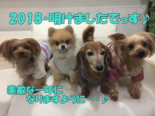 image112200801.jpg