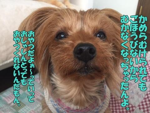 image11801180101.jpg