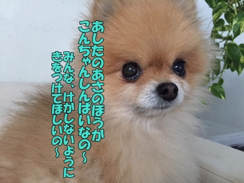 image11801220101.jpg
