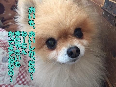 image11801250101.jpg