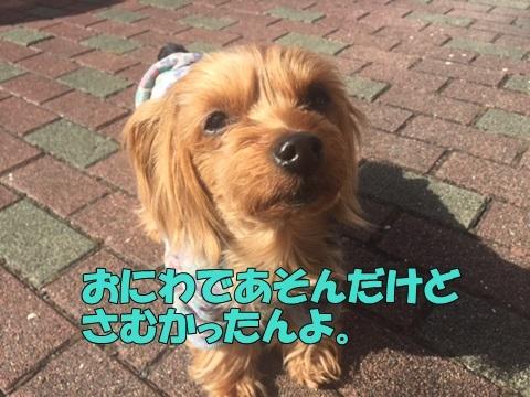 image11802130101.jpg
