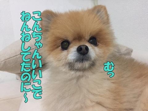 image118021801.jpg