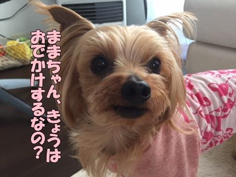 image118022302.jpg