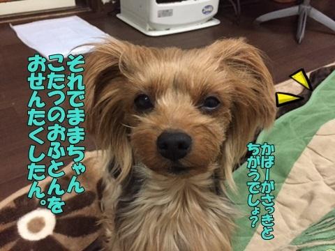 image211290203.jpg