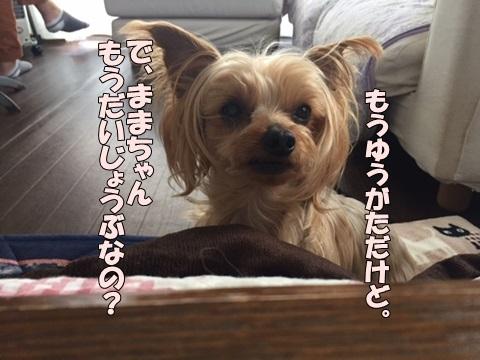 image21802040101.jpg