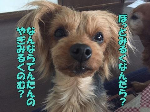 image21802060101.jpg
