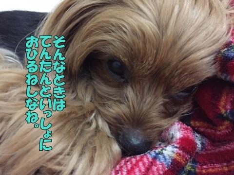 image311280203.jpg