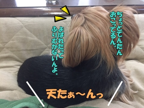 image312100203.jpg