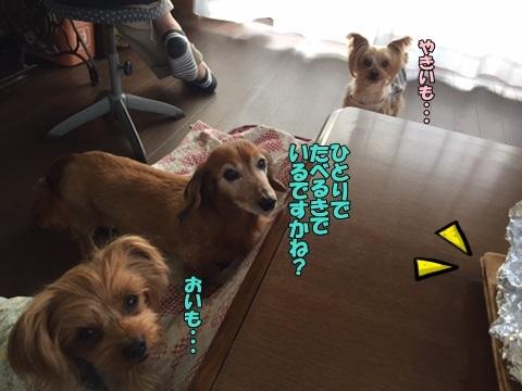 image312170404.jpg