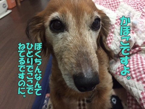 image312270203.jpg