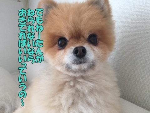 image31802040101.jpg