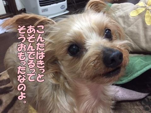 image411290203.jpg