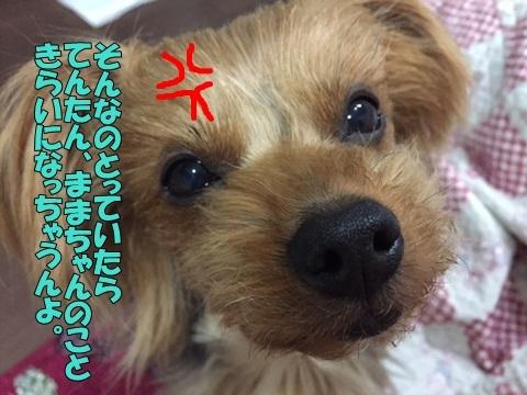 image412200203.jpg