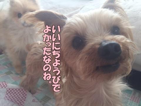 image41801140101.jpg