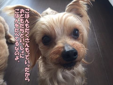 image41801280102.jpg