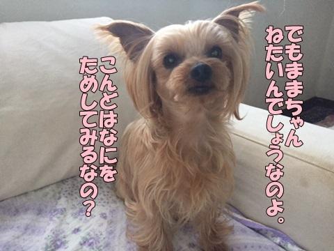 image41802060101.jpg