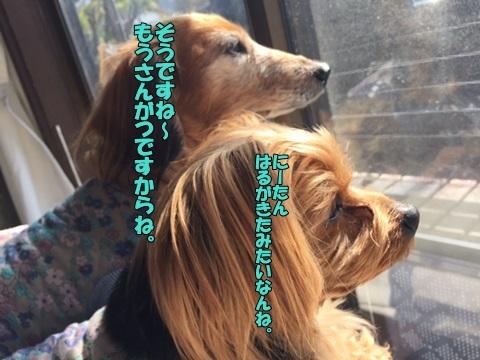 image418022701.jpg